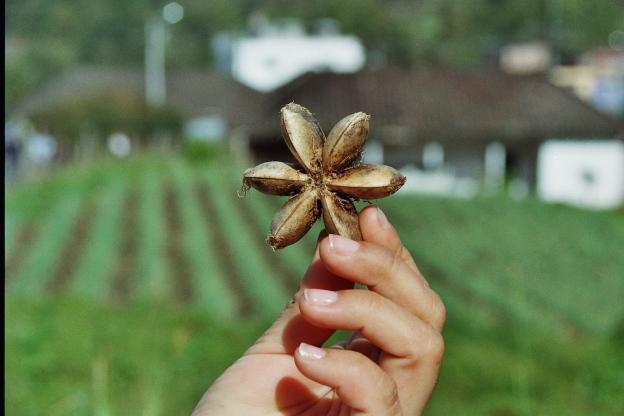 gurdian semilla